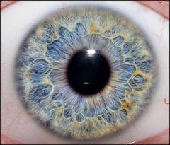 Eye - iris
